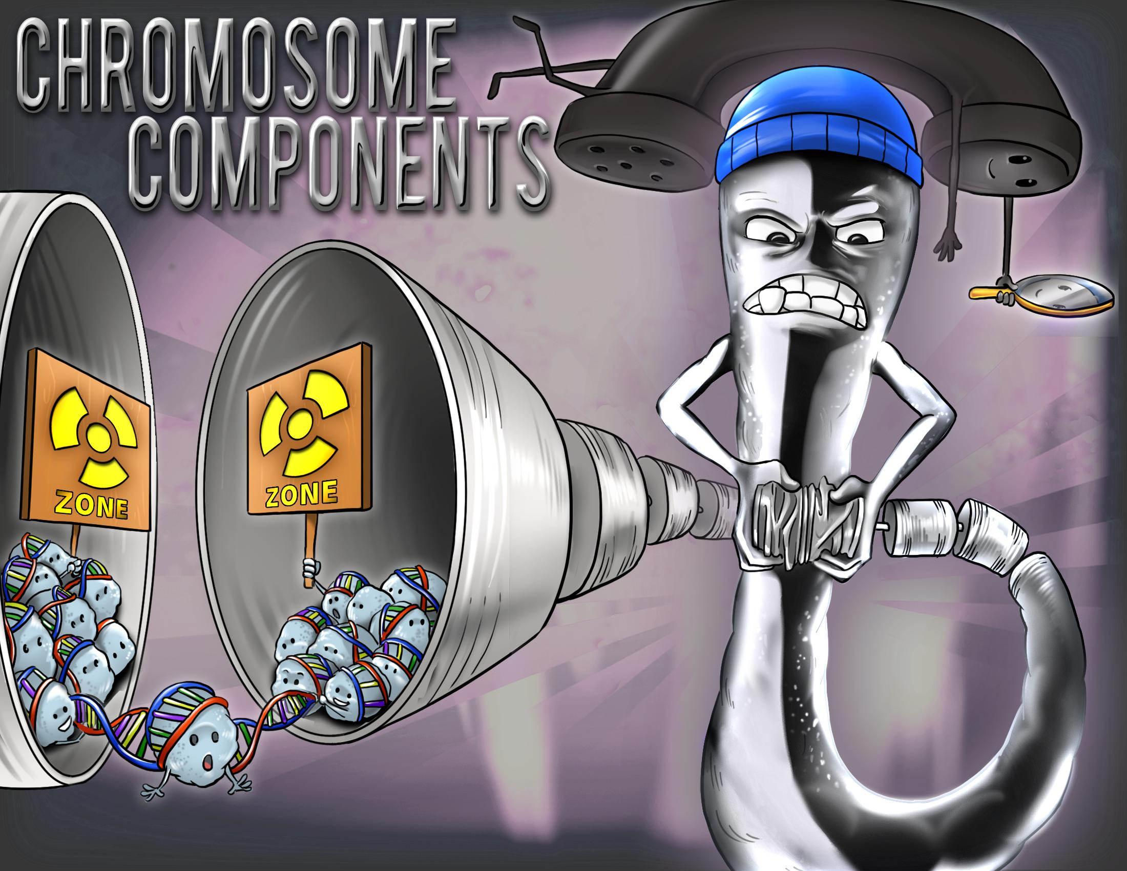 Chromosome Components