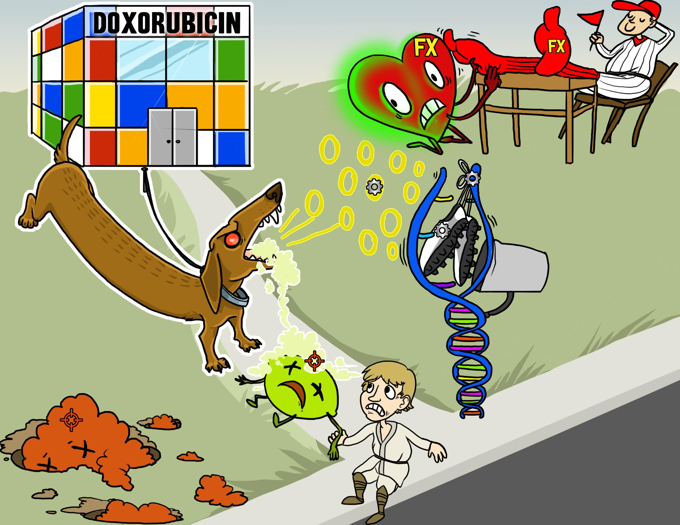 Doxorubicin (Adriamycin)