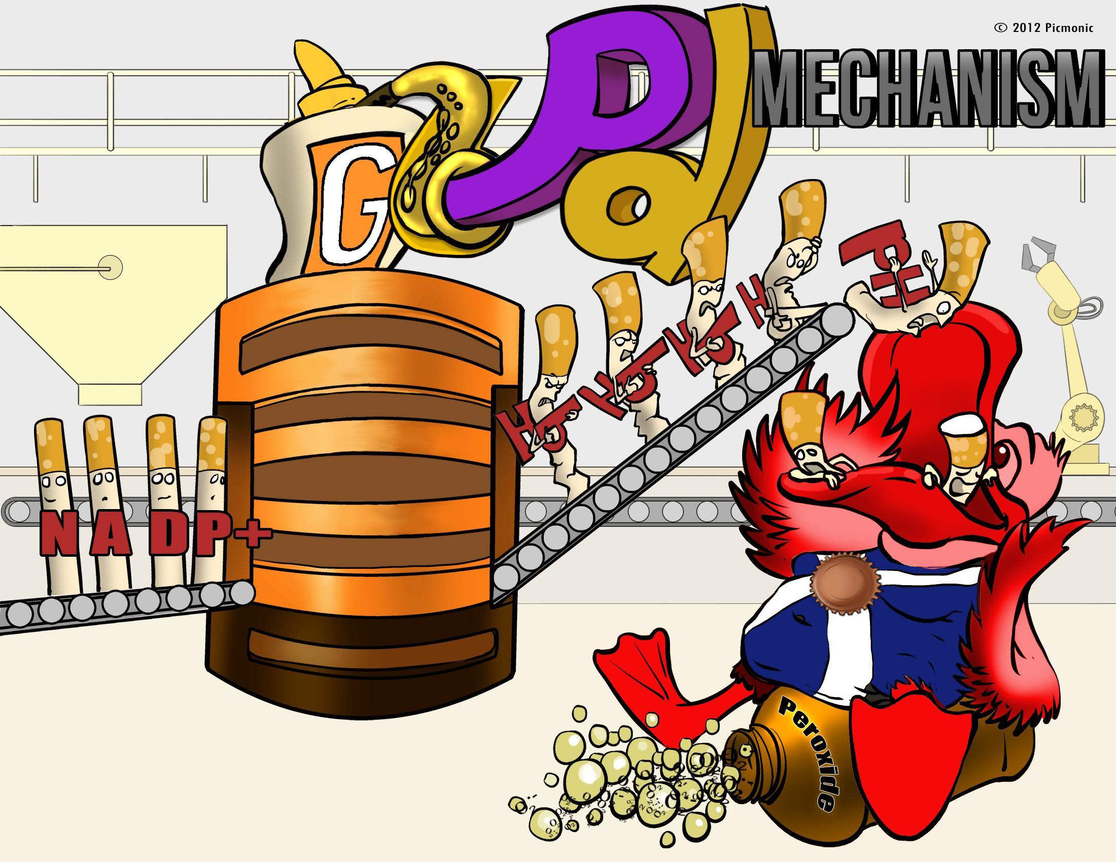 G6PD Mechanism
