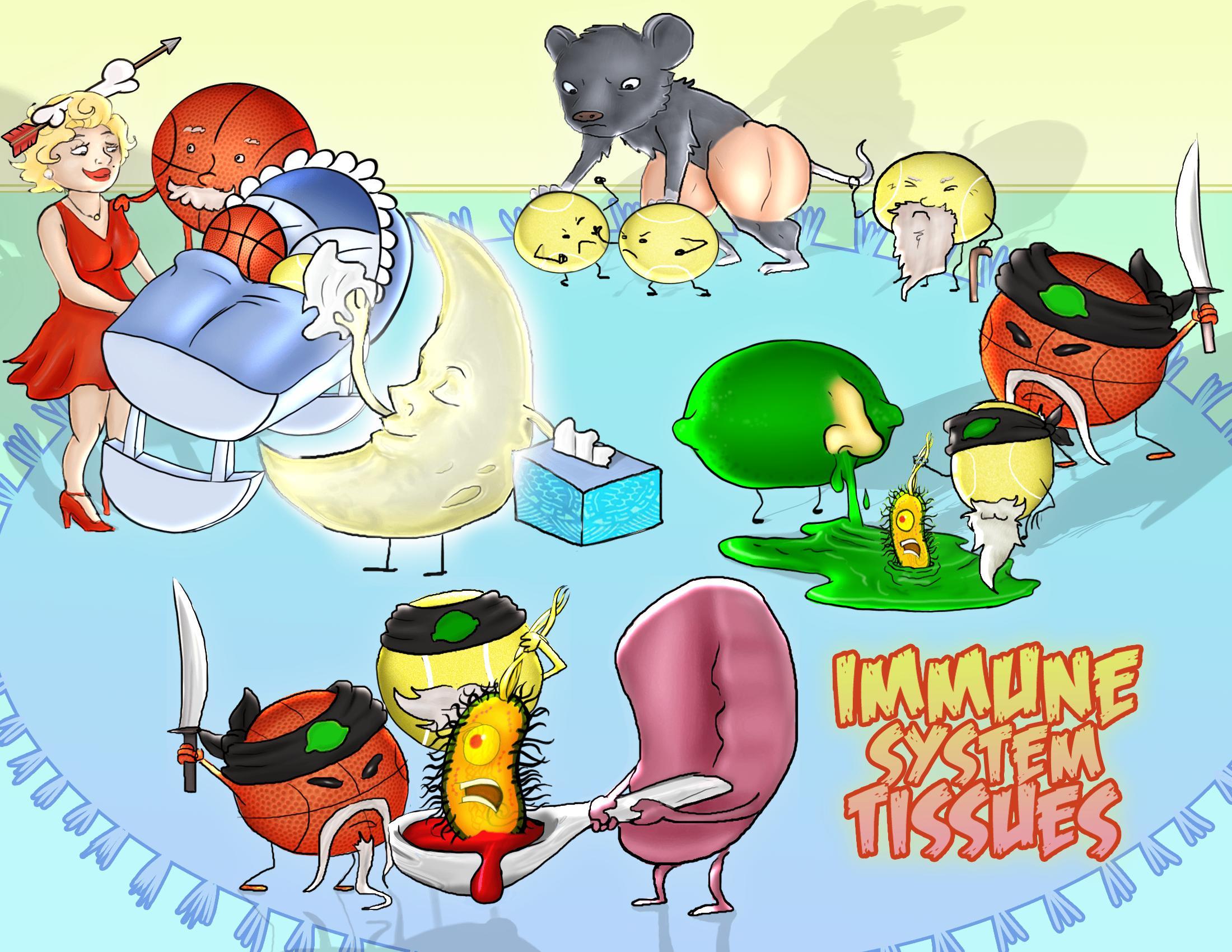Immune System Tissues