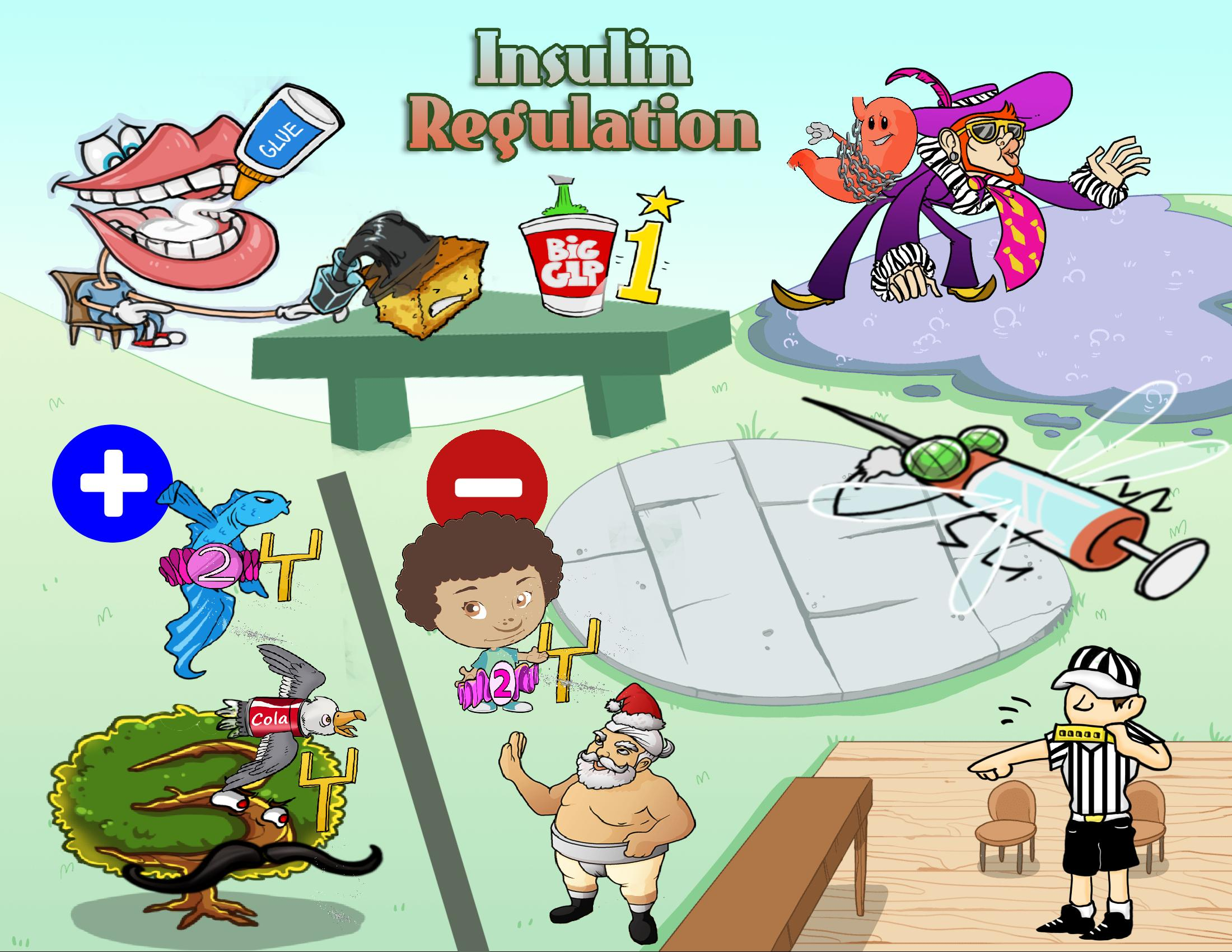 Insulin Regulation