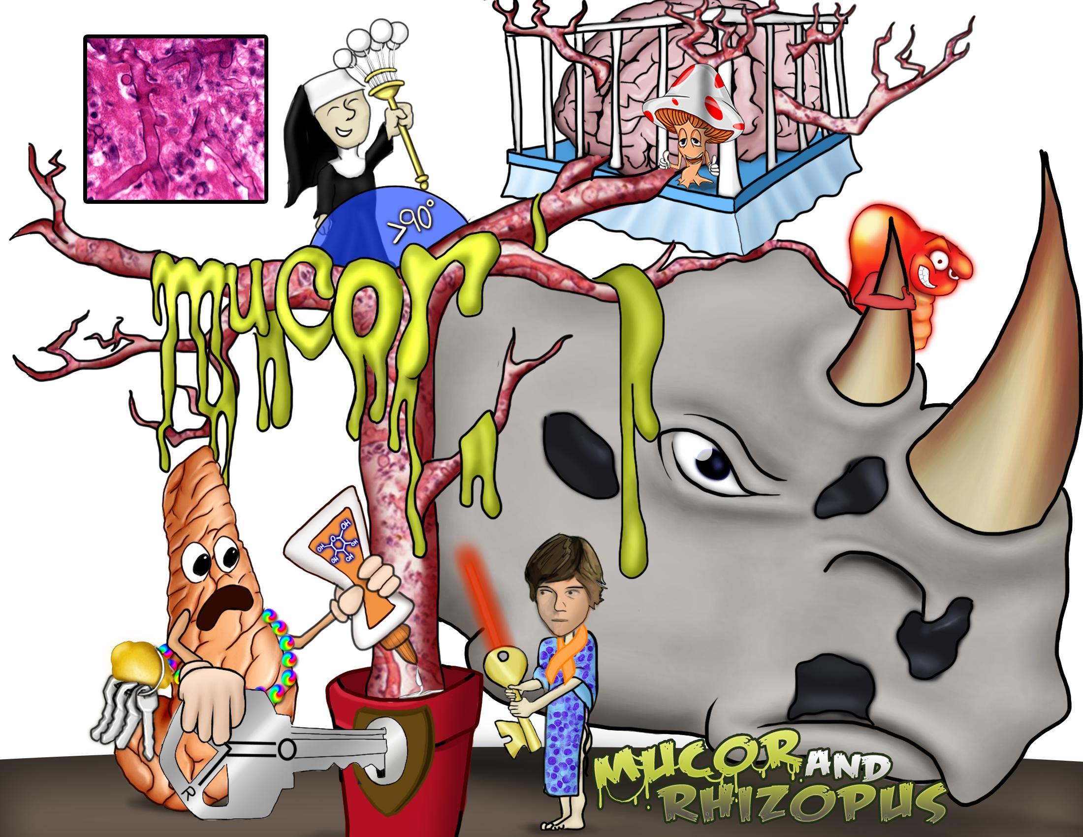 Mucor And Rhizopus