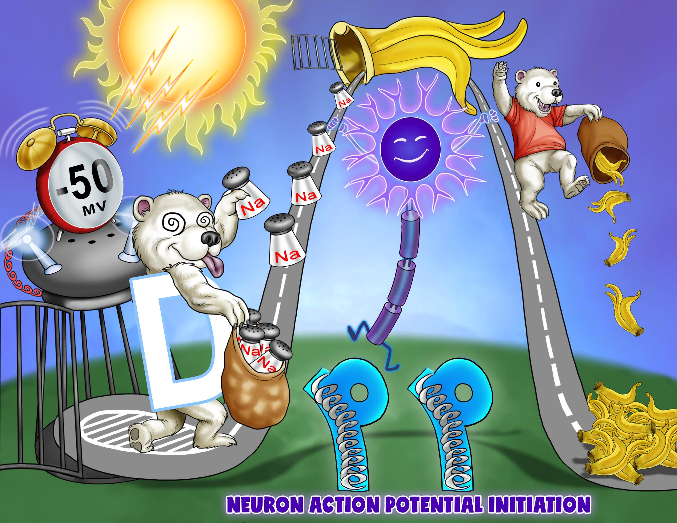 Neuron Action Potential Initiation