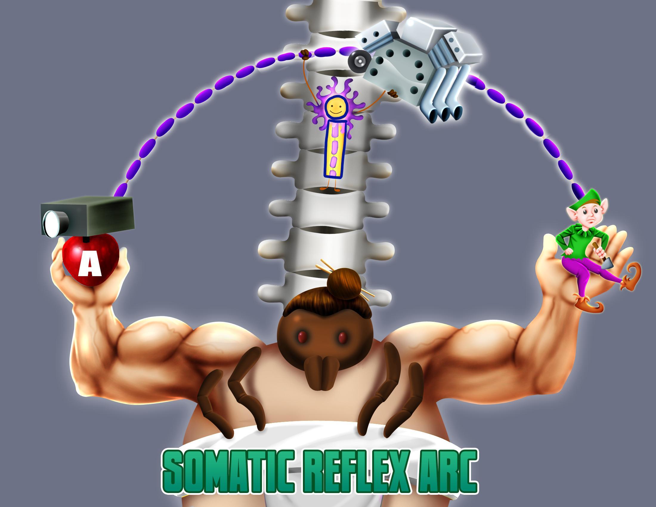 Somatic Reflex Arc