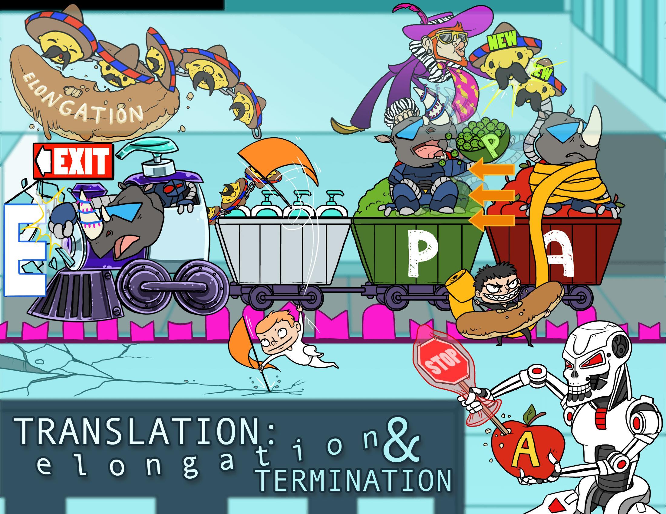 Translation: Elongation & Termination