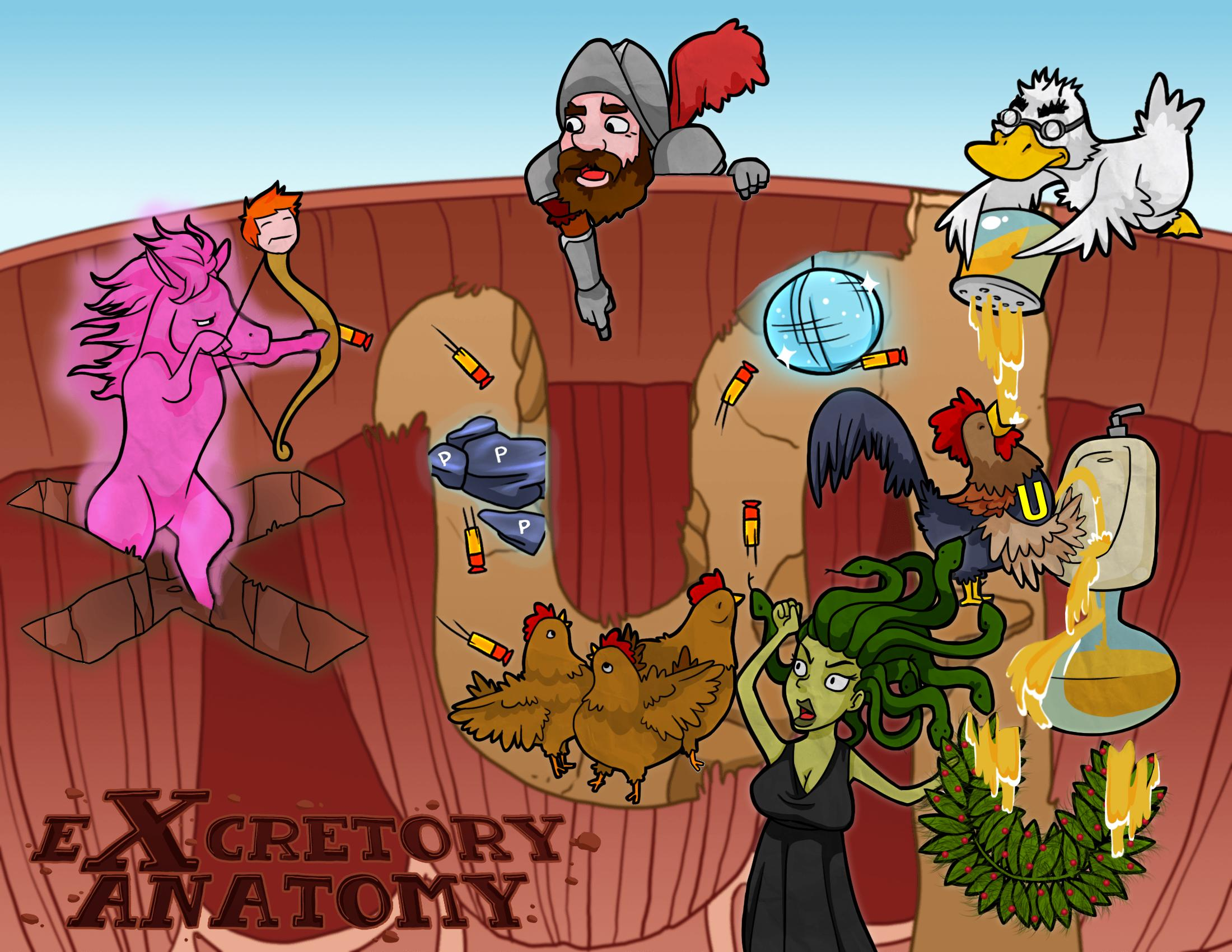Urinary Excretory Anatomy
