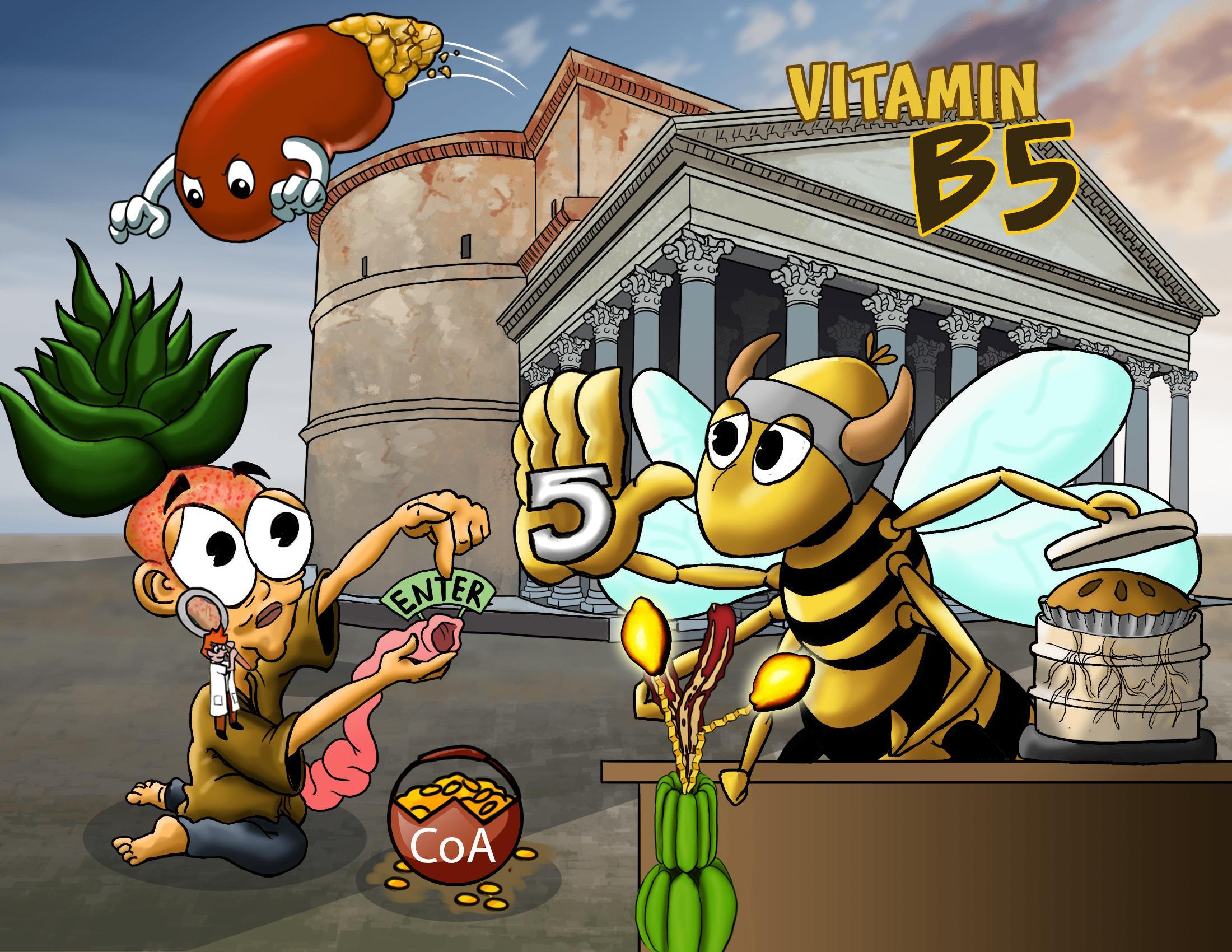 Vitamin B5 (Pantothenate)