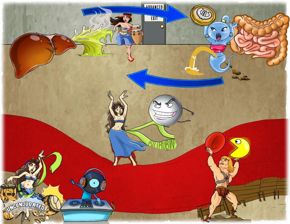 Bilirubin Metabolism Overview