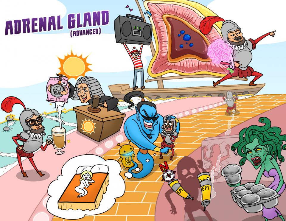 Adrenal Gland (Advanced)