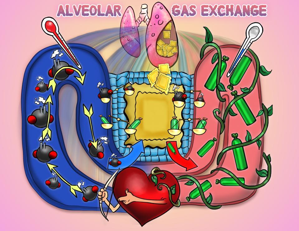 Alveolar Gas Exchange