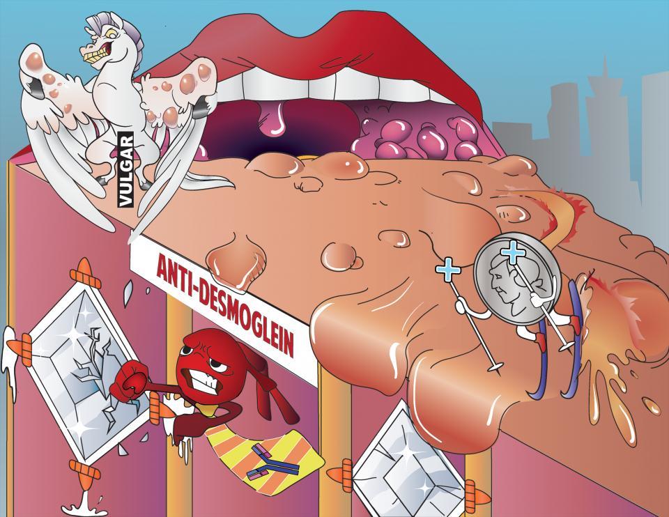 Anti-desmoglein Antibodies