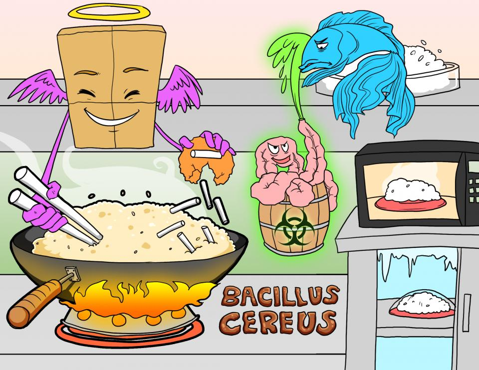 Bacillus Cereus Characteristics