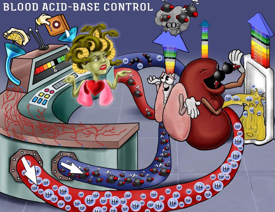 Blood Acid-Base Control