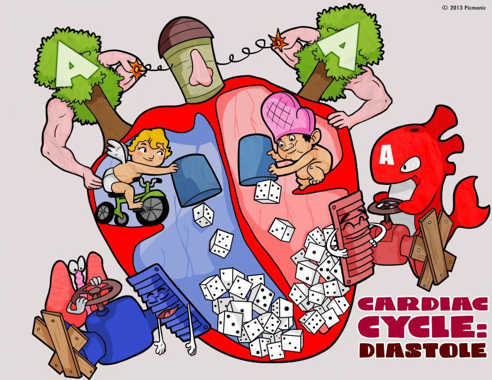Cardiac Cycle - Diastole