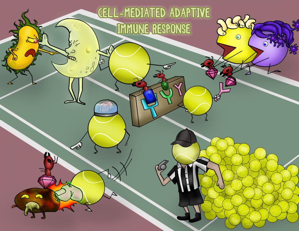 Cell-mediated Adaptive Immune Response