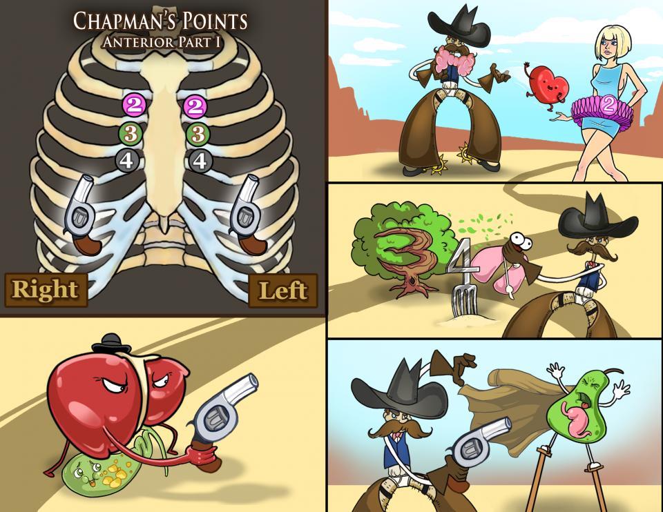 Chapman's Points - Anterior Part One