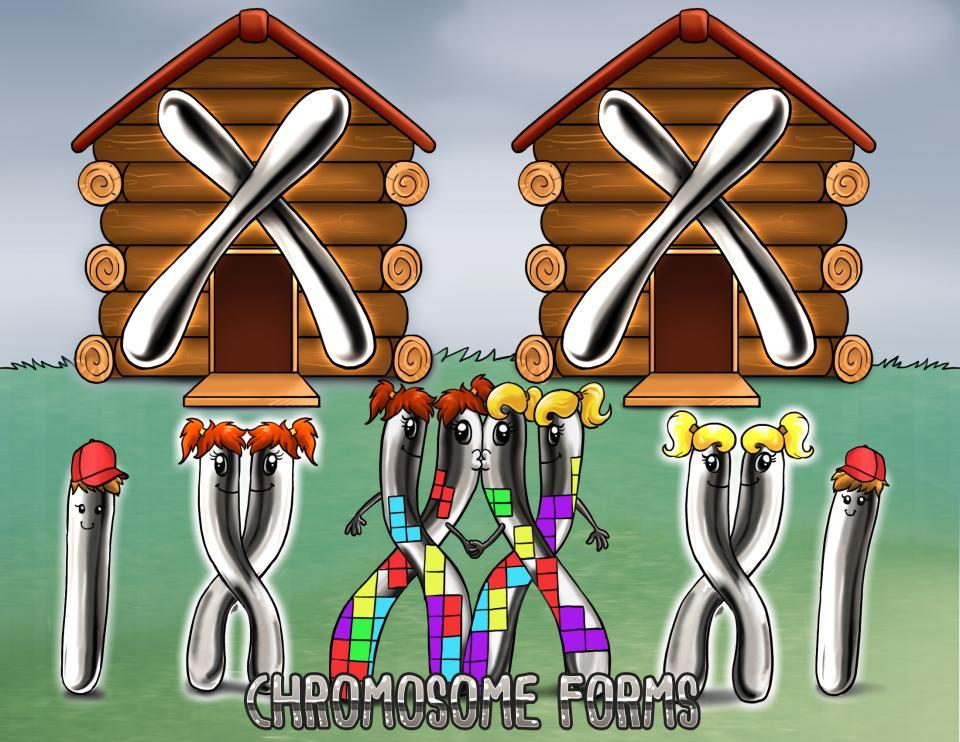 Chromosome Forms