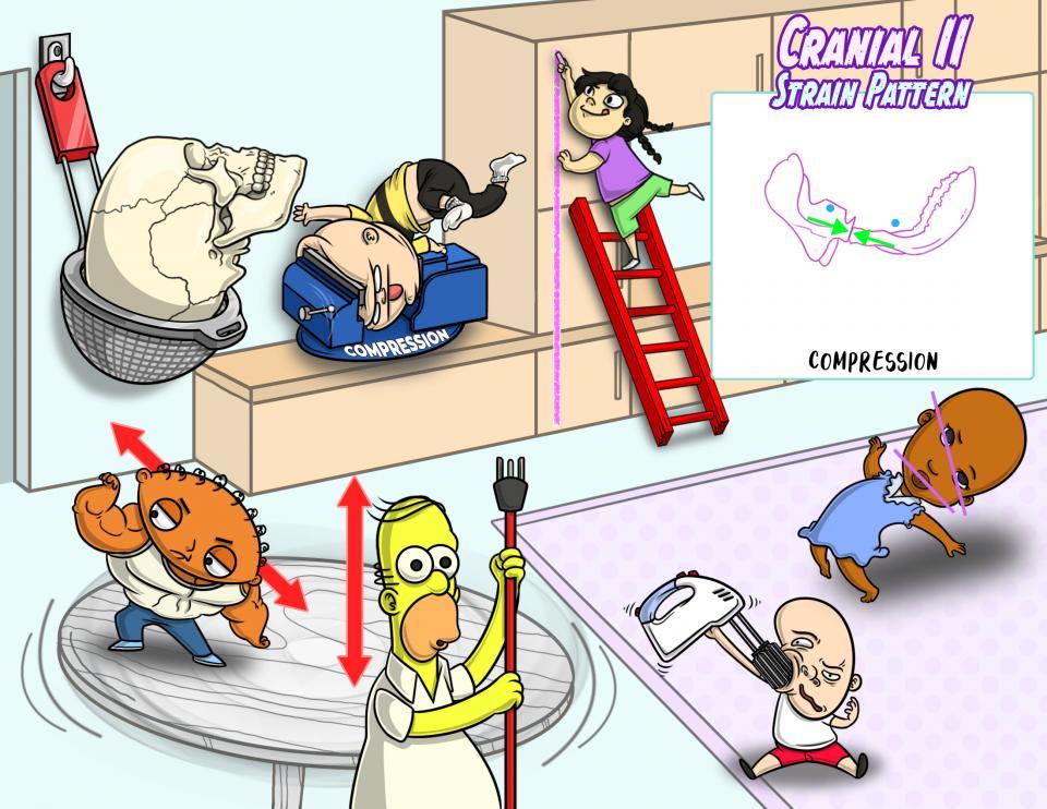 Cranial II: Strain Patterns