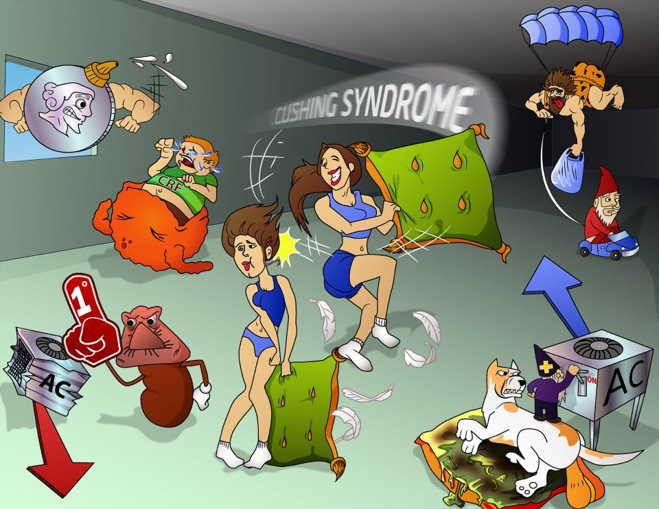 Cushing's Syndrome Characteristics