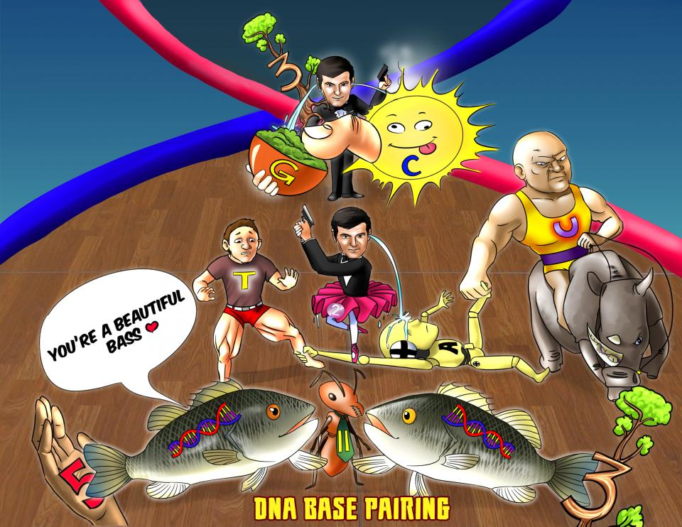 DNA Base Pairing