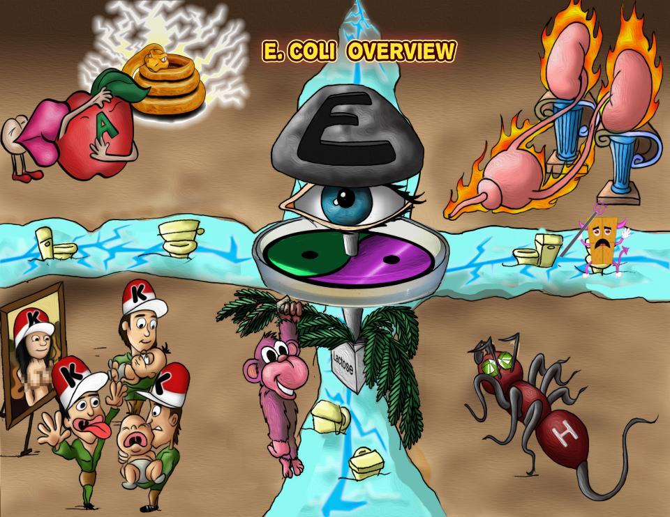 E. coli Overview