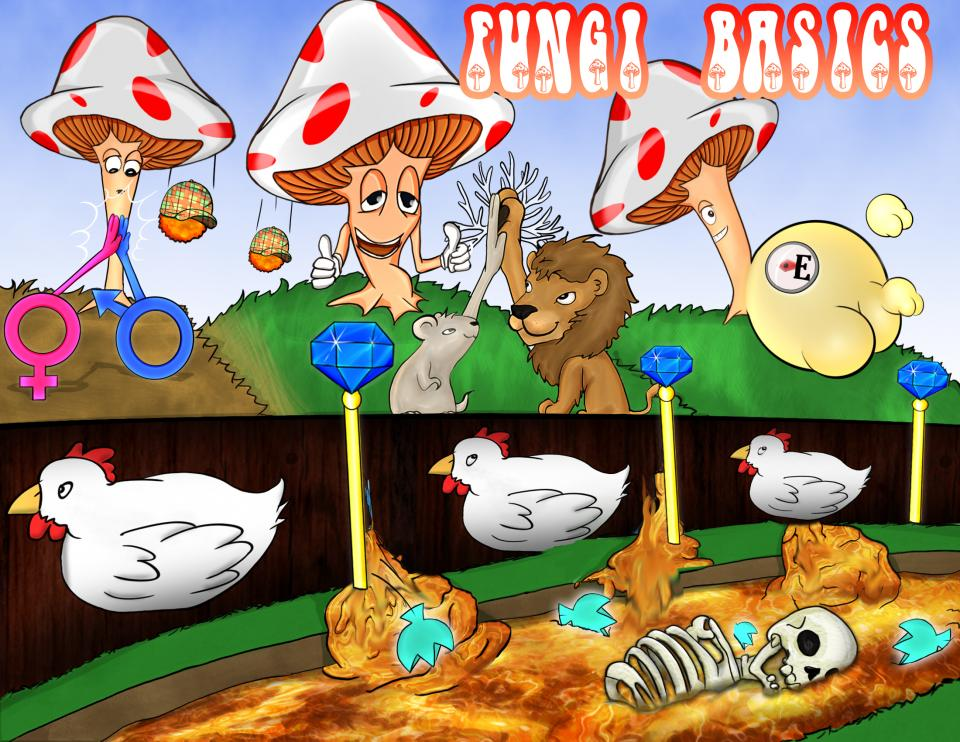 Fungi Basic Characteristics