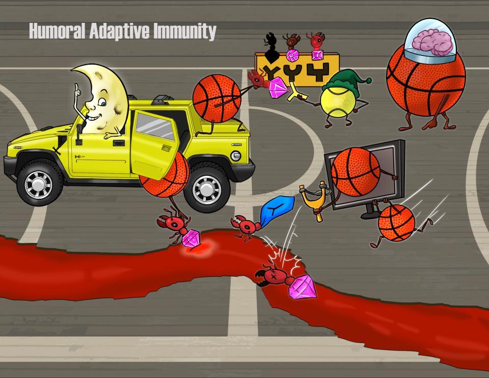 Humoral Adaptive Immunity