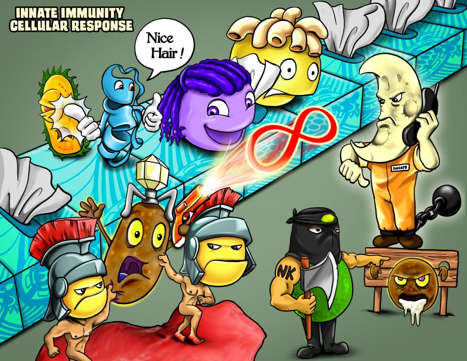 Innate Immunity Cellular Response