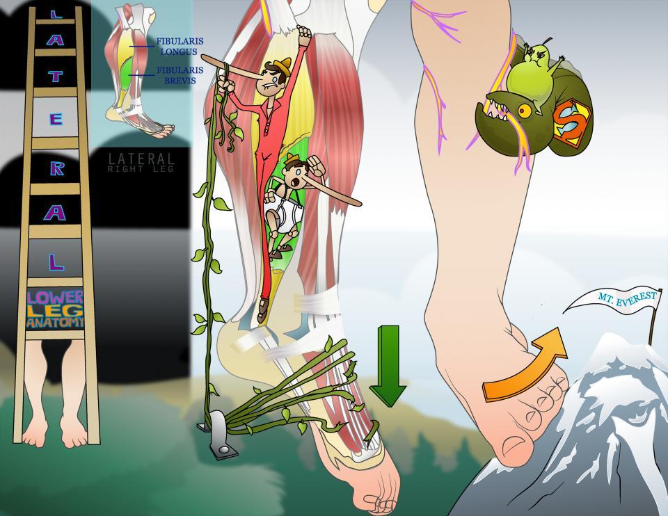 Lateral Lower Leg Anatomy