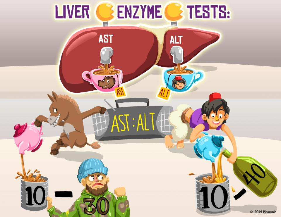 Liver Enzyme Tests: AST and ALT
