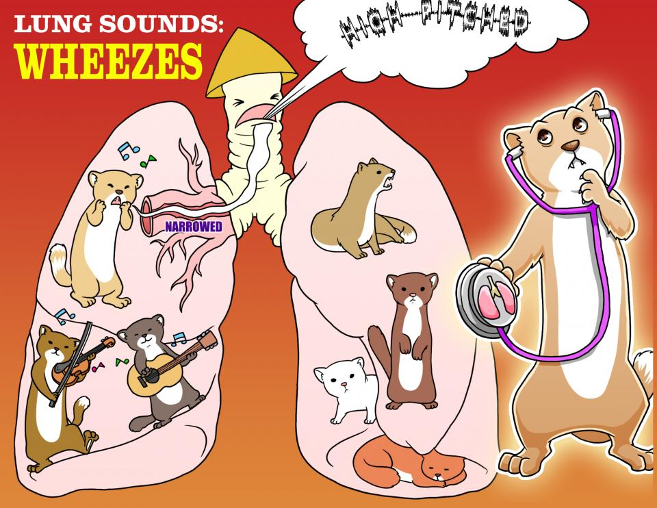 Lung Sounds - Wheezes