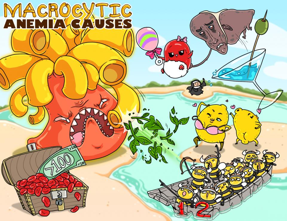 Macrocytic Anemia Causes