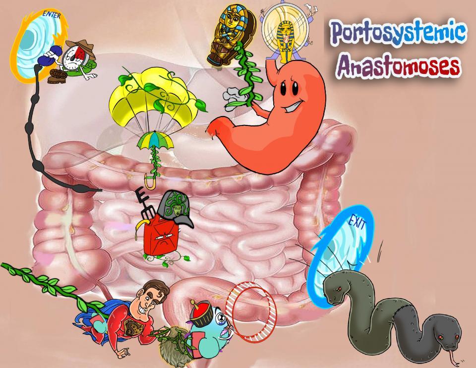 Portosystemic Anastomoses