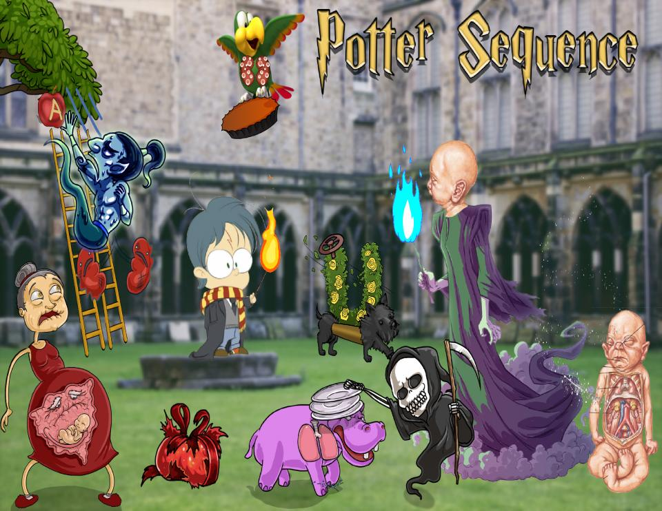 Potter Sequence