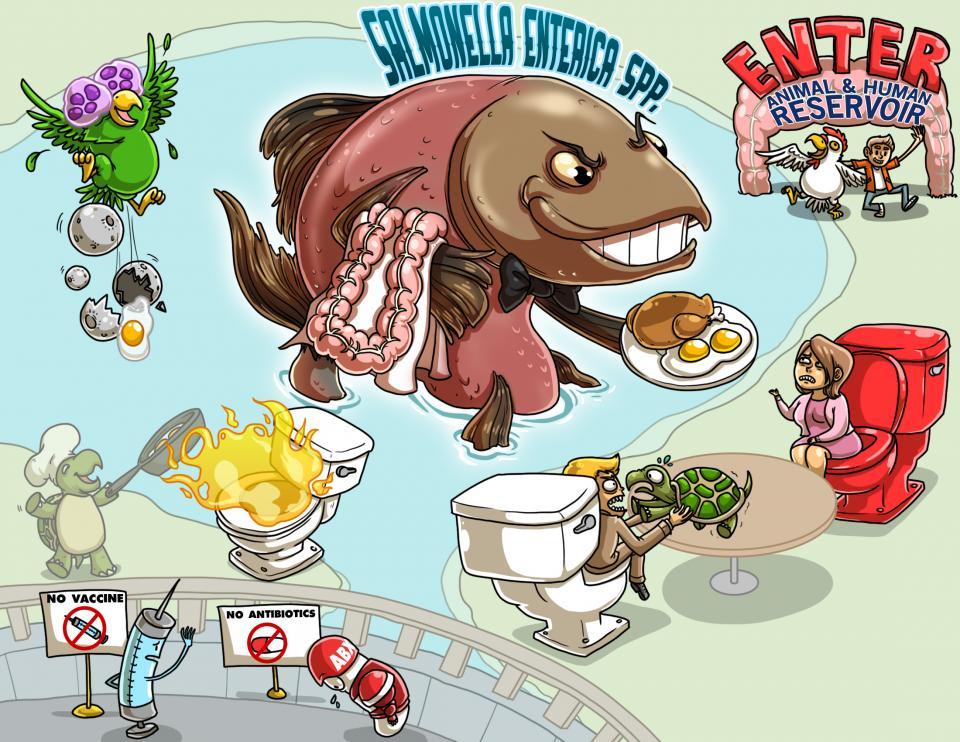 Salmonella Enterica Spp.