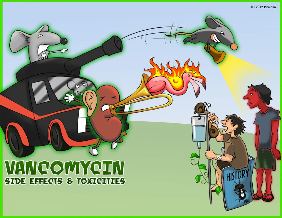 Vancomycin Side Effects & Toxicity