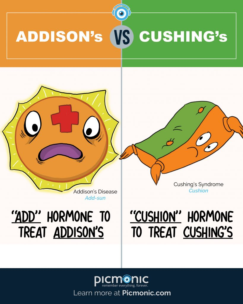 How to Study: Addisons vs Cushings