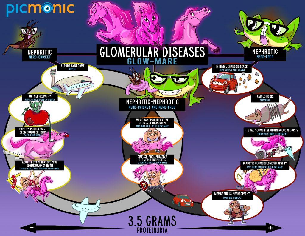 Glomerular disorders infographic