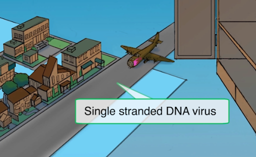 Single Stranded DNA